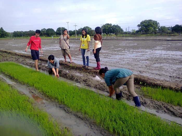 And they sang about how planting rice is no fun!